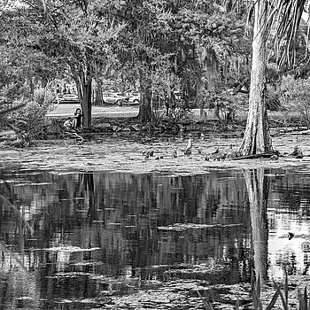 Steve Harrington - City Park Lagoon - Waterfowl Watching bw