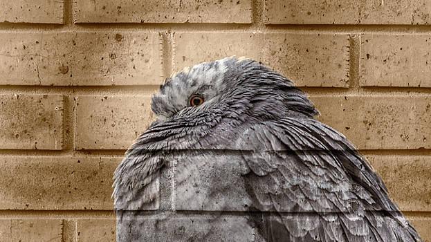 Jacek Wojnarowski - City Pigeon In Winter Fine Art