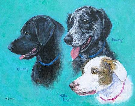 Clancy, Rowdy, and Millie Mae by Vickie Fears