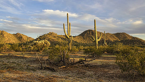 Classic Arizona by Ryan Seek