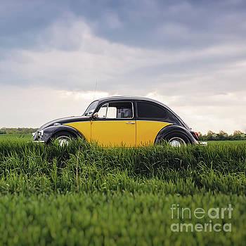 Edward Fielding - Classic VW Bug