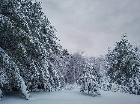 Classic Winter Scene in New England  by Mary Capriole