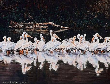Clear Lake Pelicans by Linda Becker