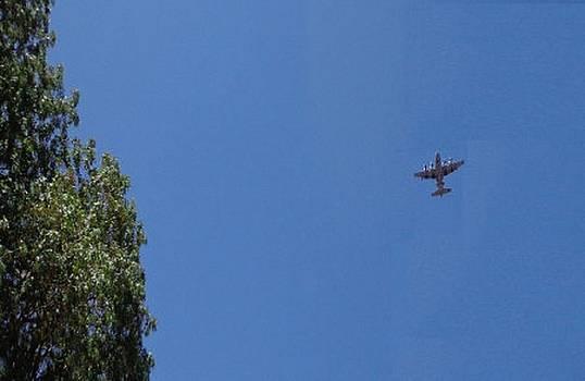 Clear Sky C130 Airplane by Mozelle Beigel Martin