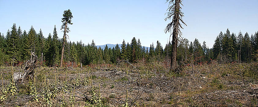 Clearcut Gifford Pinchot by Larry Darnell