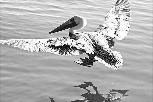 Bonnes Eyes Fine Art Photography - Cleared for landing