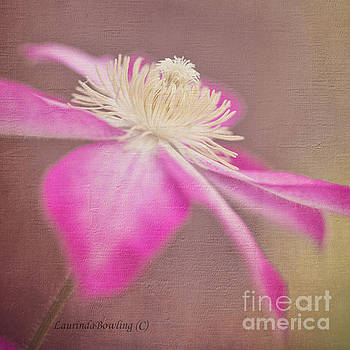 Clematis in Square Format by Laurinda Bowling