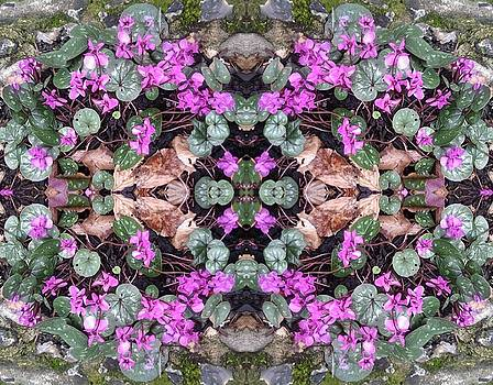 Clematis Mandala 2 Photo Art by Julia Woodman