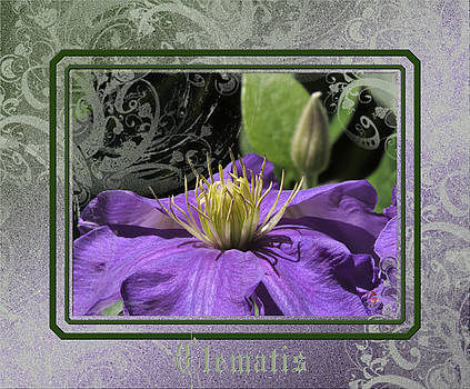 Clematis Study by Patricia Whitaker