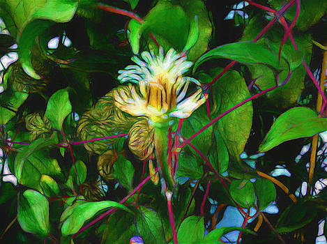 Clematis Vine After The Blooms Are Gone by Debra Lynch
