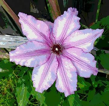 Clematis Vine in Pink by Art Speakman