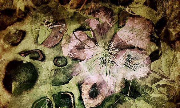 Clematis by Zsuzsa Magulya