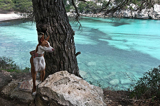Pedro Cardona Llambias - Cleopatra in a turquoise paradise