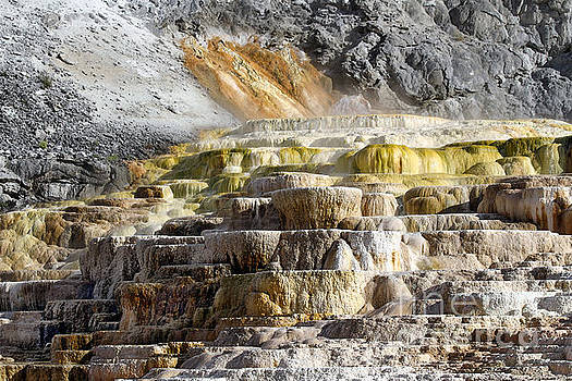 Cleopatra Terrace in Yellowstone National Park by Catherine Sherman
