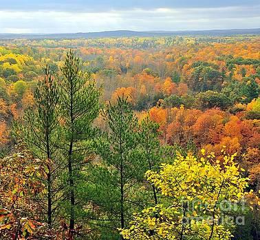 Terri Gostola - Cliff Top Autumn View