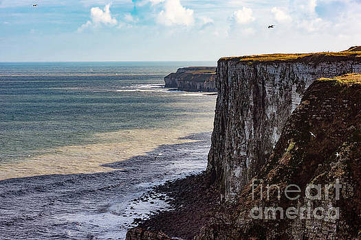 Cliffs of Bempton by Anthony Baatz