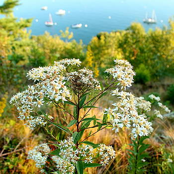 Cliffside Wildflowers by Charles Shedd