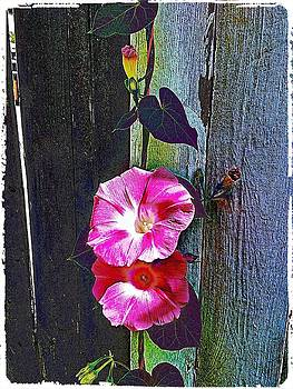 Climbing Flower by Cathy Peterson