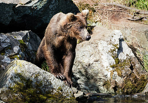 Climbing on the rocks by Gloria Anderson