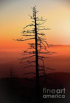 Clingman's Dome Sunrise by Douglas Stucky