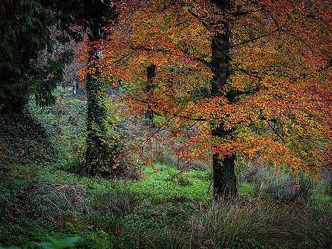 Clondegad Woods in Autumn by James Truett