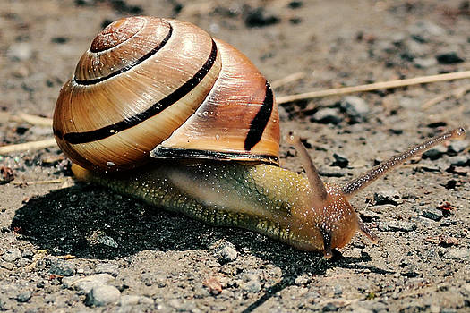 Close encounter with the snail by Asbed Iskedjian