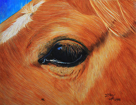 Close up of a horse by Don MacCarthy