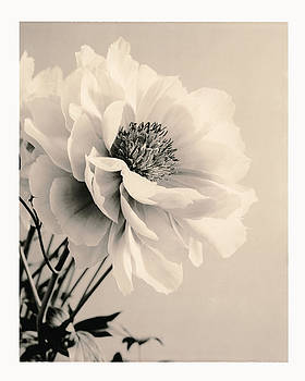 Close-up Of Flower With Filter by Gillham Studios