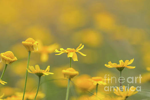 Close up of Yellow Flower with blur background by PorqueNo Studios