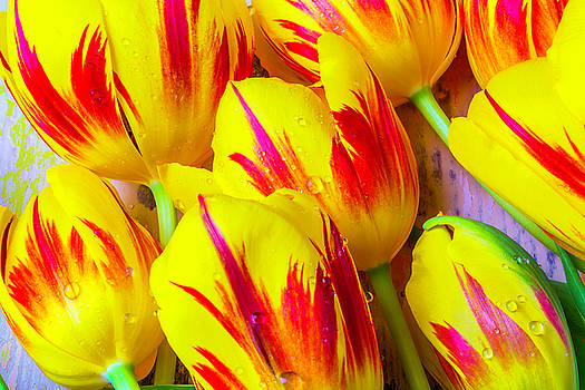 Close Up Red Yellow Tulips by Garry Gay