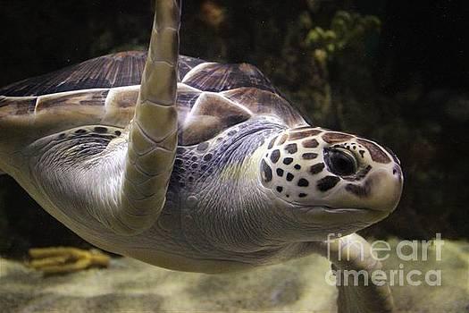 Close Up Sea Turtle by Paulette Thomas