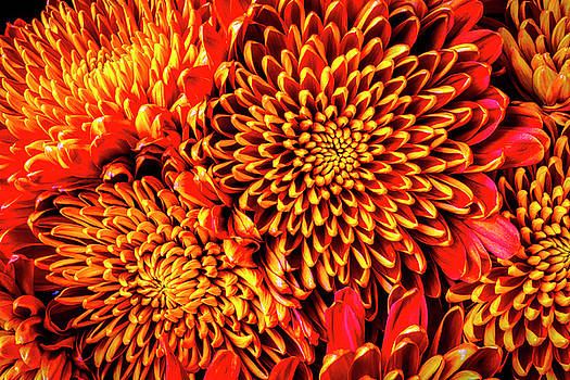 Close Up Spider Mum Bouquet by Garry Gay