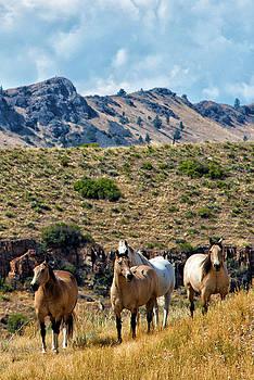 Close Up Wild Horses Montana by Michael Gallitelli