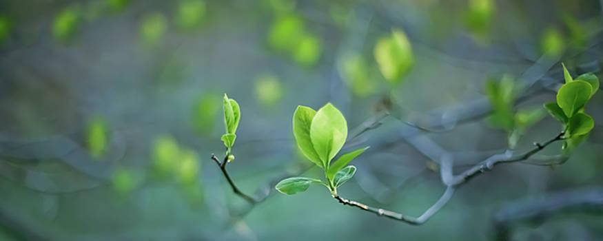 Closer To Spring by Elvira Pinkhas