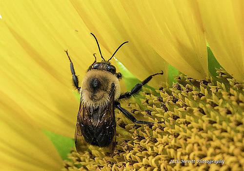 Closeup Bee On Flower by Jack Nevitt