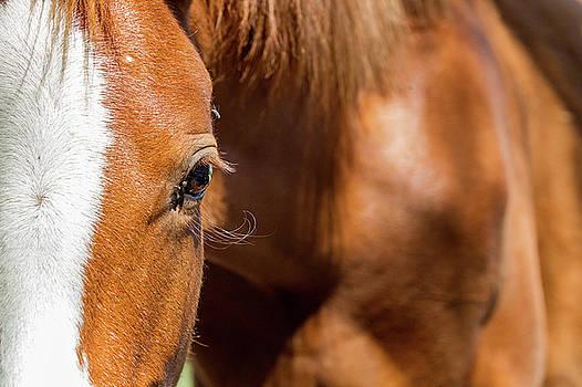 Closeup Horse Eye With Copy Space by Susan Schmitz