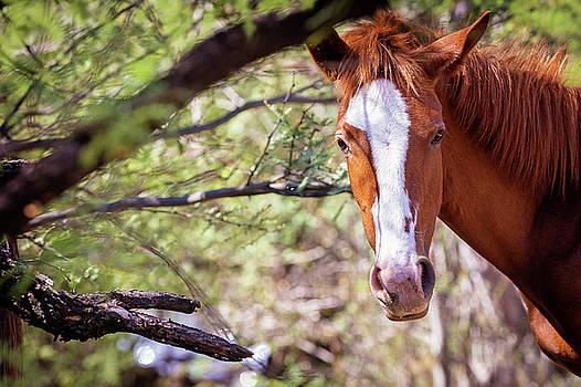 Susan Schmitz - Closeup of Beautiful Wild Horse With Copy Space