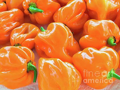Closeup of fresh chillies Habanero Orange by Giovanni Bertagna