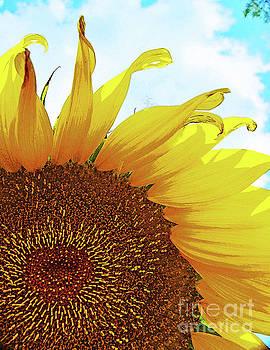 George D Gordon III - Closeup Poster Sunflower