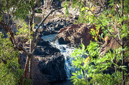 Closeup view in between the trees at Edith Falls, Katherine, Australia. by Daniela Constantinescu