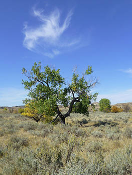 Cloud and Cottonwood by Cris Fulton