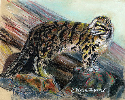Olga Kaczmar - Clouded Leopard