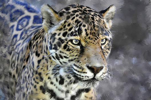 Clouded Leopard potrait by Savannah Gibbs