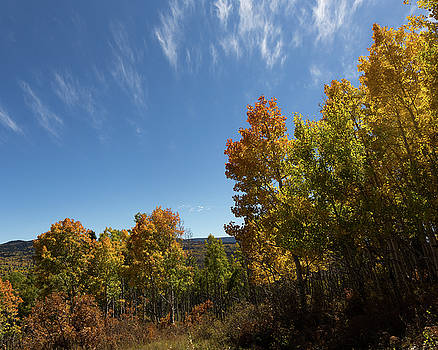 Clouds and Aspens, Rio Arriba County, NM by Troy Montemayor