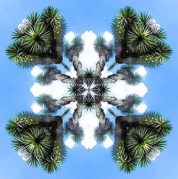 Clouds and palms by Jesus Nicolas Castanon