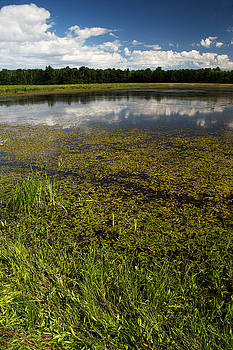 Clouds and Reflections in Swamp by Amanda Kiplinger