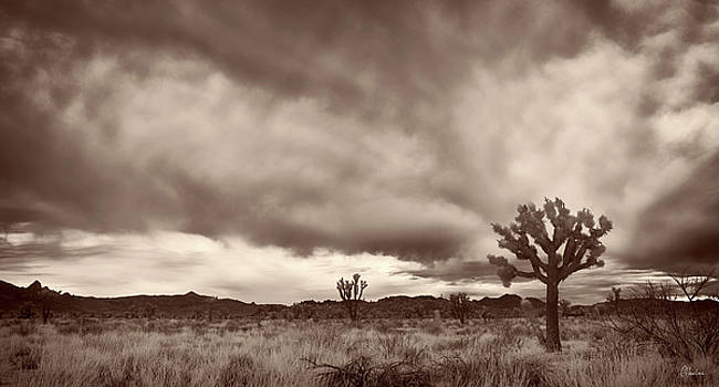 Clouds in the Desert by Christine Hauber