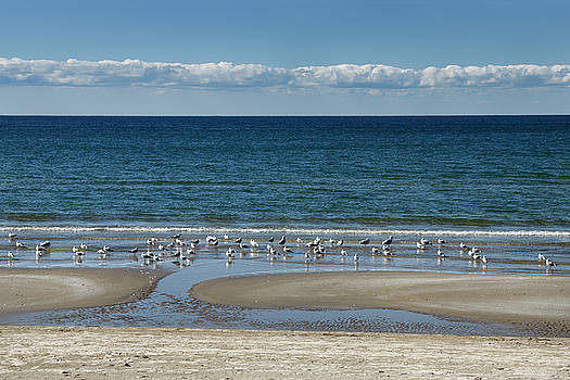 Reimar Gaertner - Clouds over Lake Ontario Athol Bay with seagulls on Outlet Beach