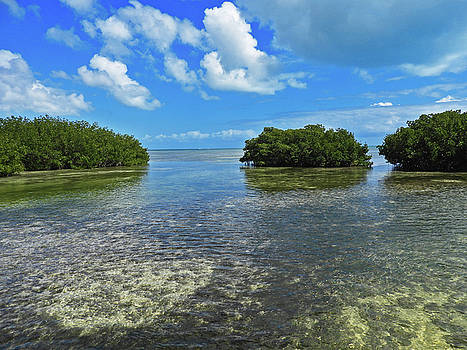 Clouds Over the Mangroves in Key West 2 by Bob Slitzan