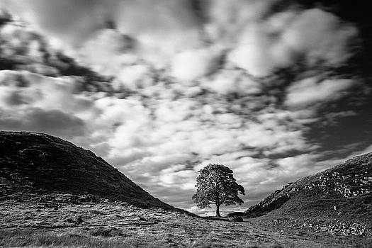 Cloudscape Sycamore BW by David Taylor